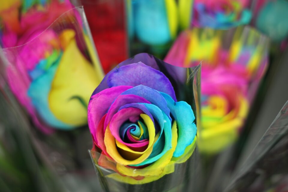 Use the best yet affordable same day flower delivery service in Brampton